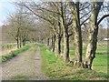 UUU7518 : Wilhelmstadt - Rieselfelderallee (Sewage Farmland Avenue) von Colin Smith
