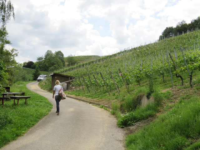 Weinberg auf dem Glottertal Rebhisli-Tour (Vineyards on the Glottertal Rebhisli-Tour)