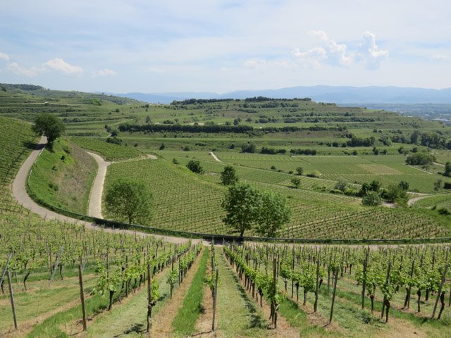 Blick über die Weinberge auf Kaiserstuhl (View across the vineyards on Kaiserstuhl)