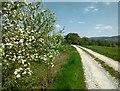 UPA5305 : Feldweg nahe Elsenberg by Günter G