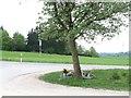 UNU7684 : Gerstetten - Gedenkstätte an ein Unfallopfer an der L1164 von gps-for-five