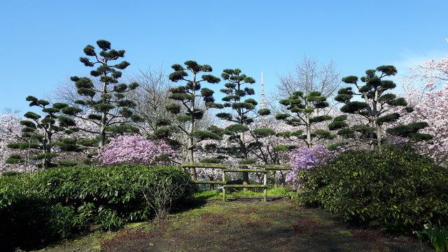 Planten Un Blomen Japanischer Garten Hamburg Mgrs 32une6535