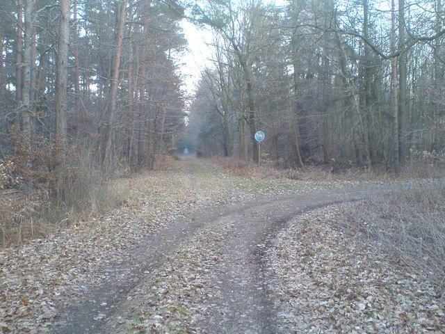 Verzweigung von Waldwegen (Junction of forest roads)