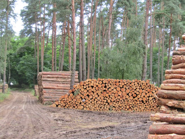 Baumgartener Heide - Holzsammlungpunkt (Baumgarten Heath - Log Collection Point)