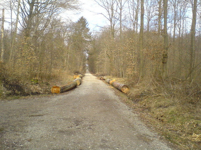 Waldweg nach Wennigser Mark (Forest road to Wennigser Mark)