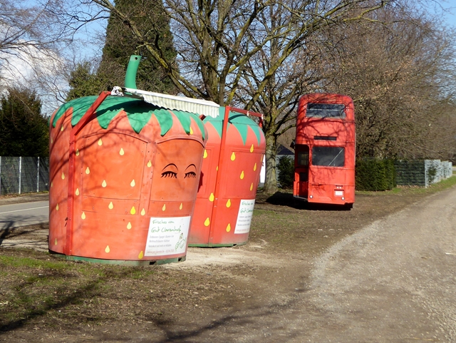 Giant strawberries at Clarenhof